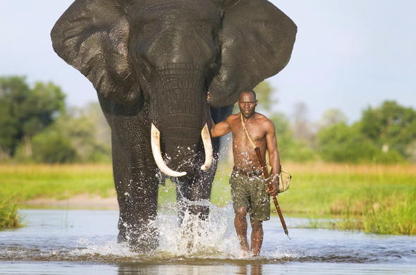 Elephant and handler walking the Delta.