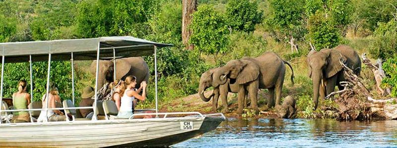 Chobe River safari in Botswana.
