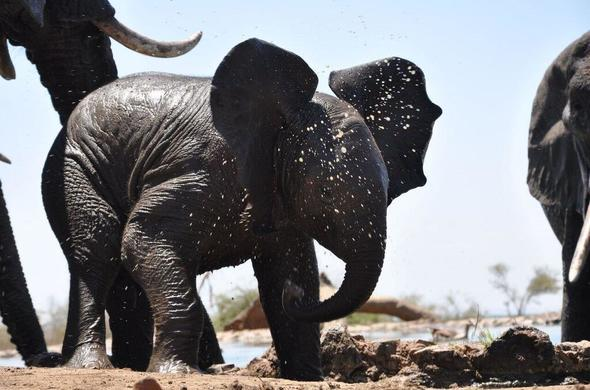 See baby Elephant on your family safari in Madikwe.