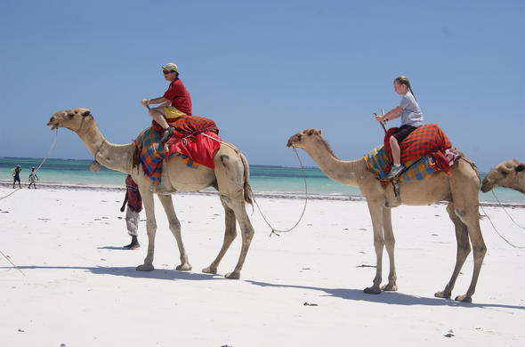 Camel ride on Diani Beach