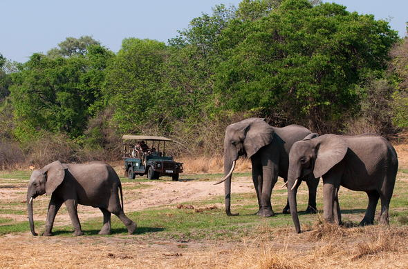 Go on game drives in South Luangwa National Park.