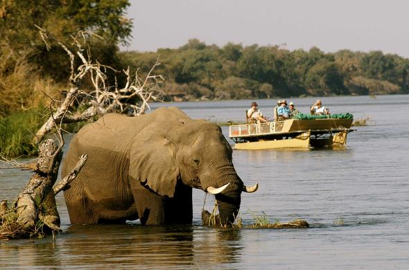 Elephant encounter on Lower Zambezi river safari with Chiawa Lodge