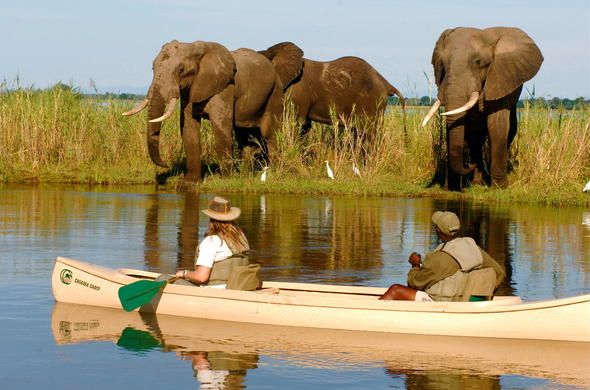Elephants spotted while on canoe safari in Zambia.