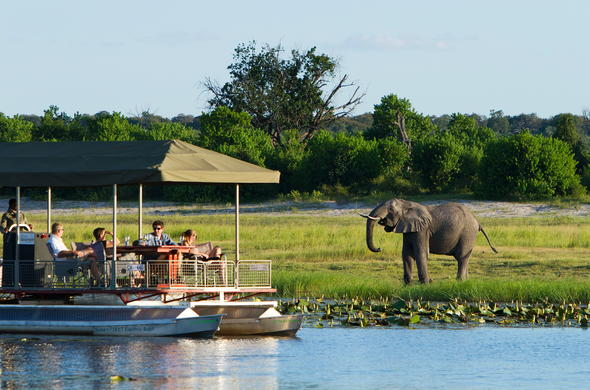 Elephant spotted on the banks of the Chobe river during a boat safari.