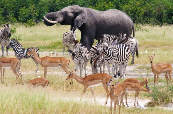 See wildlife on your Botswana safari.