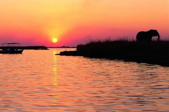 Image result for Chobe river sunsets images