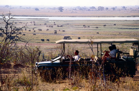 Herd of Elephants spotted on game drive.