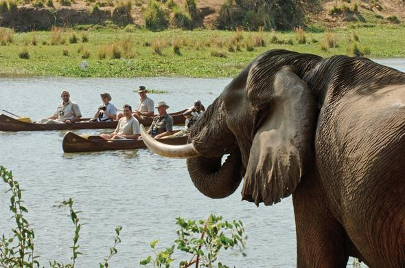 See Elephant while canoeing down the Chongwe River.
