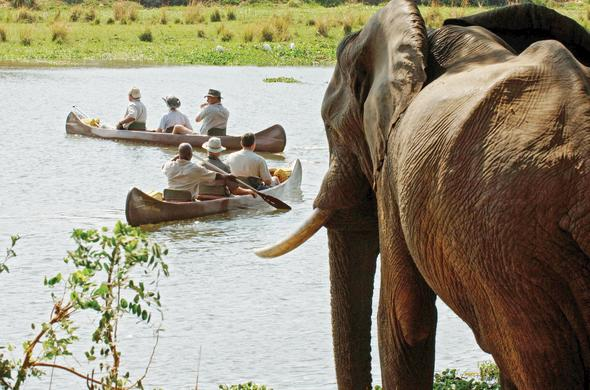 Elephant sighting on a canoeing safari.