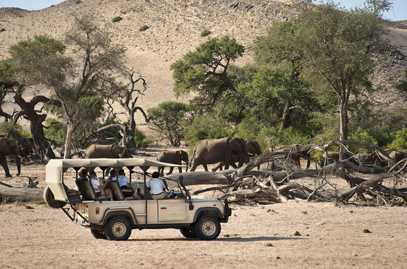 Elephants seen in Namibia on game drive activity