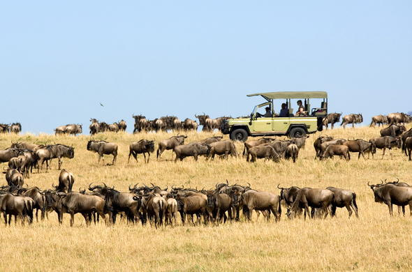 Serengeti game drive surrounded by wildebeest.