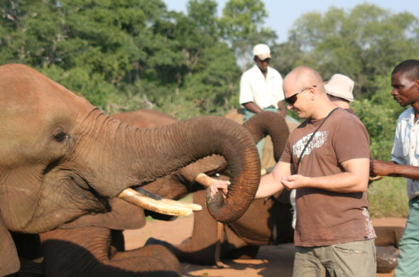 Get close to Elephants and feed them.
