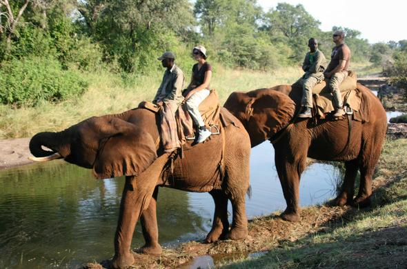 Elephants make a pit-stop during a Vic Falls elephant-back safari