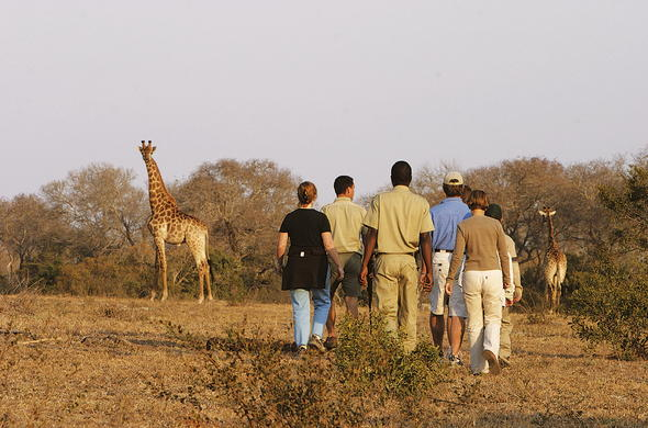 Bush walk in Kruger National Park with experienced guides.