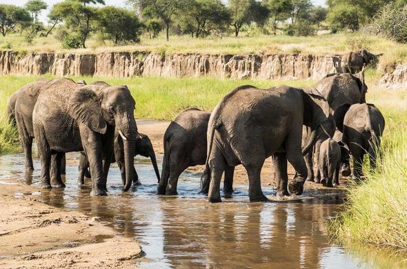 Serengeti Safari Explorer | Tanzania East Africa | African Safari Tours