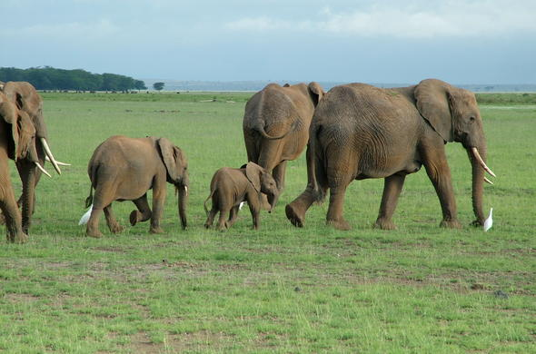 Herd of elephants in Samburu National Reserve.