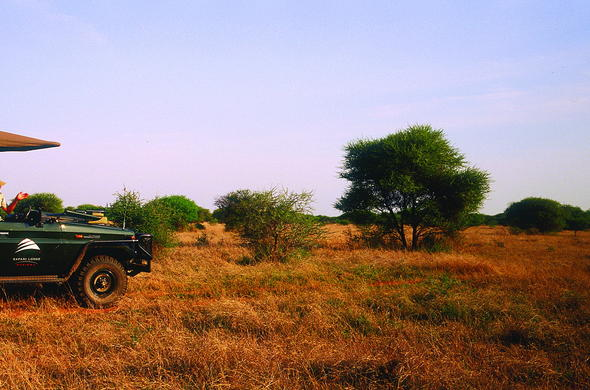 Game drives in Madikwe Game Reserve.