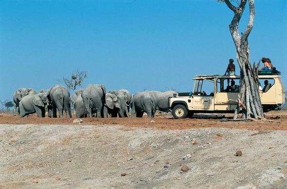 Etosha, elephants and sky