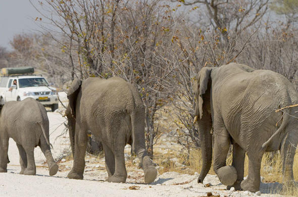 Self-drive tour in Etosha National Park.