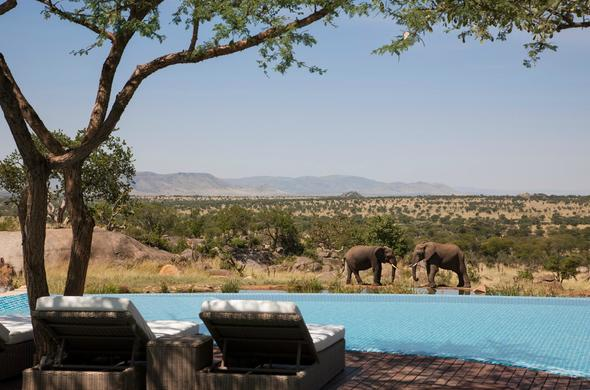 Lounge next to the pool as the elephants come for a drink.