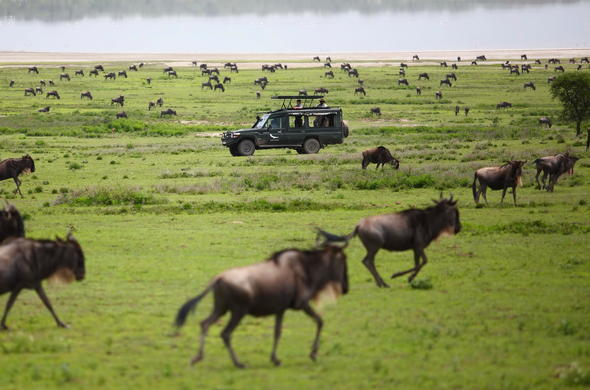 Game drive during wildebeest migration in Serengeti.