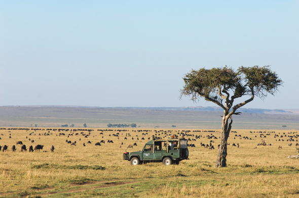 Witness the wildebeest migration on a safari game drive.