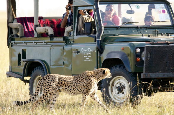 Cheetah sighting on an action-packed game drives.