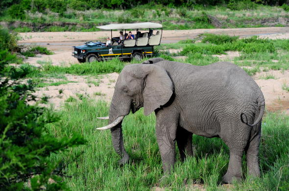 An elephant as seen by guests on a game