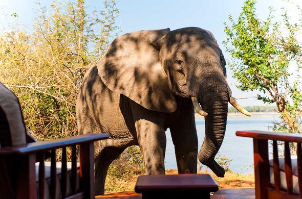 Elephant at your private deck. Kasaka River Lodge