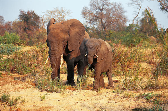 See Elephants on your South African safari.