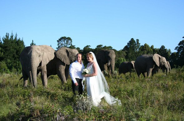 Get married at Knysna Elephant Park
