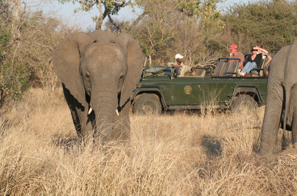 Off road game drive in Timbavati Private Game Reserve.