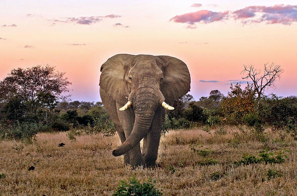 Elephant sighting in Kruger National Park.