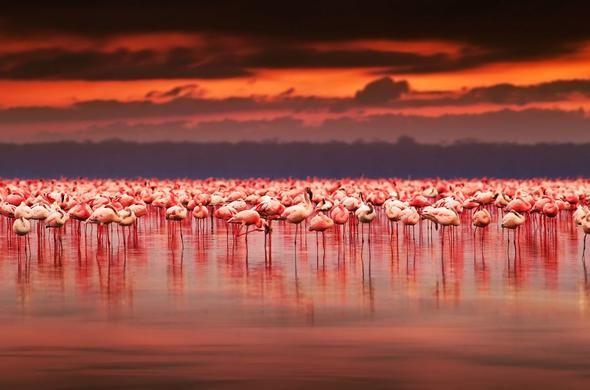 Flamingos at sunset on Lake Nakuru