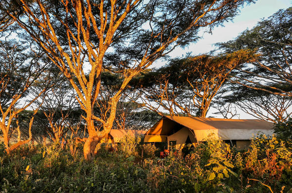 Tented suites located among lush trees of Ngorongoro Conservation Area.