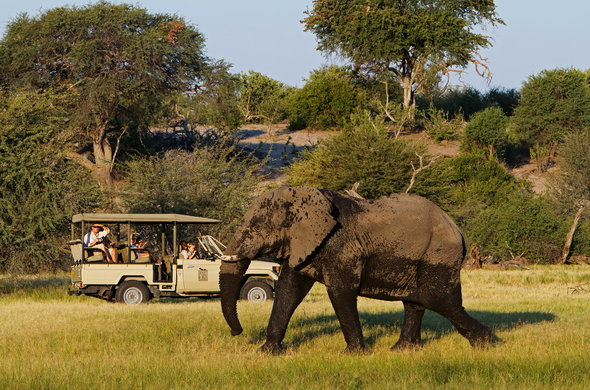 Elephant sighting on game drive in Botswana.