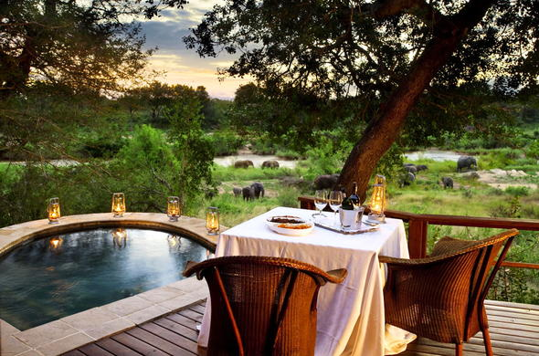 Enjoy a glass of wine while watching elephants.