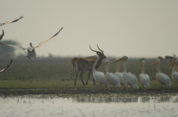 Birding at Lechwe Camp