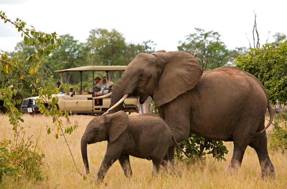 See Elephant mother and baby while on a game drive.