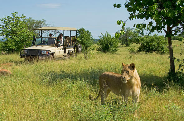 See Lion while on a game drive in South Luangwa.