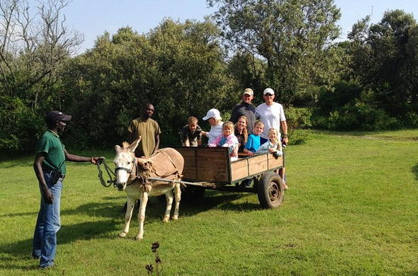 Guests on a Donkey lead cart.