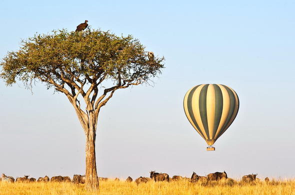 Mara Ballooning offers an incredible way to witness the Great Zebra and Wildebeest Migration.