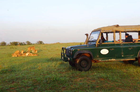 Guests of Mara Explorer witnessing a pride of lion.