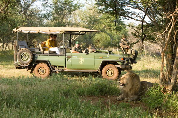 Spotting a lion during a afternoon game drive.