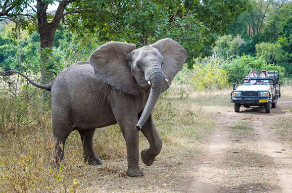 Game drives in Malawi's only Big Five Park.