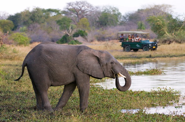 Elephant spotted on safari game drive in Malawi.