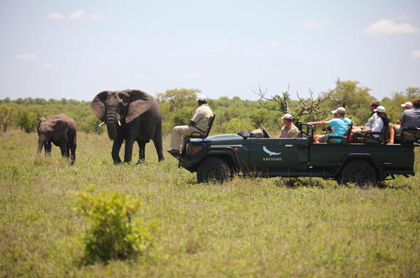 Spotting elephants mother and calf in Timbavati Game Reserve.
