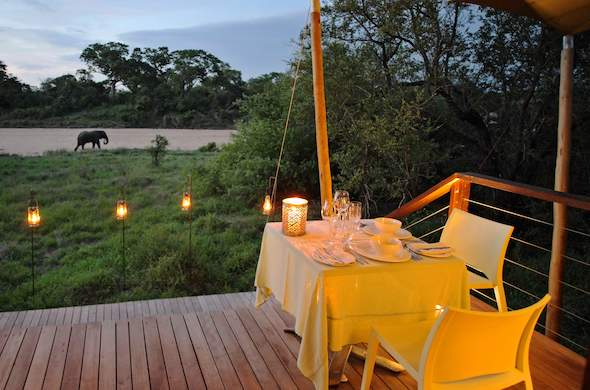 See elephant while having sundowners at Ngala Tented Safari Camp.