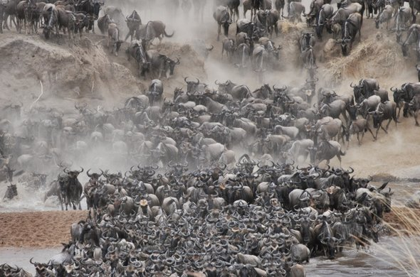 Great Migration at Ngare Serian Camp.