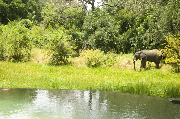 See elephant on the banks of the Luangwa River.